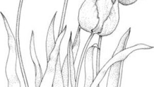 Drawing Many Flowers 61 Best Art Pencil Drawings Of Flowers Images Pencil Drawings