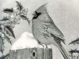 Drawing Mediums Title Season S Greetings Cardinal and Holly Artist Sarah Batalka