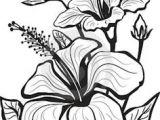 Drawing Multiple Flowers 1412 Nejlepa A Ch Obrazka Z Nasta Nky Flower Drawings Drawings