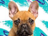 Drawing My Dog Maggie Dog Art Cat Art Custom Pet Pop Art Pop Your Pup