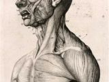 Drawing Neck Muscles 174 Best Anatomy Reference Head Neck Skull Images Drawing Heads