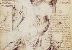 Drawing Neck Muscles Shoulder and Neck 3 Leonardo Da Vinci In 2018 Leonardo Da
