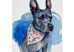 Drawing Of A Blue Dog Blue Nose Pit Bull Dog Watercolor Painting Poster at Zazzle Com