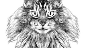 Drawing Of A Cat Black and White Cat Breed Maine Coon Face Sketch Vector Black and White Drawing