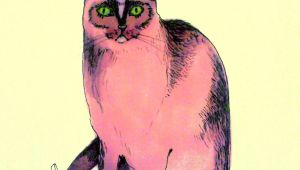 Drawing Of A Cat Paw Pink Cat Illustration Cats Cat Art Cats Illustration