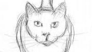 Drawing Of A Cat Pencil Easy Cat Drawings In Pencil Wallpapers Gallery Art and