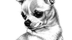 Drawing Of A Chihuahua Dog Die 64 Besten Bilder Von Chihuahua Drawings Chihuahua Art Und