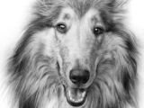 Drawing Of A Collie Dog 1604 Best Coloring Pages Animal Kingdom Images Coloring Books