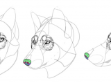 Drawing Of A Dangerous Dog How to Draw A Wolf Head and Shoulders Knees and Paws