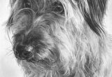 Drawing Of A Dog Running 358 Best Dog Art Dog Illustration Images Drawings Dog Art Dog
