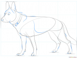 Drawing Of A Dog Step by Step How to Draw A German Shepherd Dog Step by Step Drawing Tutorials