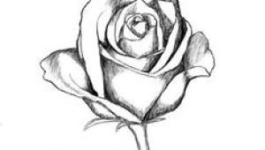 Drawing Of A Dozen Roses 136 Best Rose Drawings Images Painting Drawing Painting On