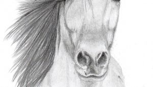 Drawing Of A Girl On A Horse Pencil Sketches Of Animals Horse Pencil Sketch by Vulpes Corsac