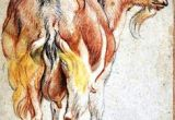 Drawing Of A Goat S Eye 131 Best Goats and Sheep Images Animal Pictures Animal Drawings