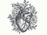 Drawing Of A Heart attack 1596 Best Anatomical Heart Images Anatomical Heart Human Heart