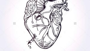 Drawing Of A Heart with An Arrow Sketched Hand Drawn Line Art Beautiful Human Heart with Arrow El
