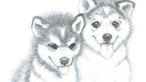 Drawing Of A Husky Dog Image Result for Husky Puppy Drawing Husky Pup Pinterest Husky