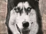 Drawing Of A Husky Dog Title Siberian Husky Drawing Medium Charcoal Newspaper Collage I