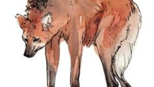 Drawing Of A Maned Wolf 85 Best Maned Wolf Images Maned Wolf Wolves Bad Wolf