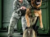 Drawing Of A Police Dog 157 Best Military Police K9 Images Military Dogs Military Working