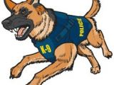 Drawing Of A Police Dog 776 Best K 9 Images Funny Animals Fluffy Animals Cutest Animals