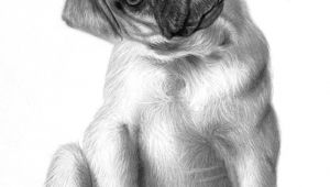 Drawing Of A Pug Dog Animal Art Dog Pencil Drawings Art Pinterest Pug Perros