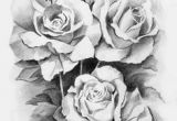Drawing Of A Real Rose 61 Best Art Pencil Drawings Of Flowers Images Pencil Drawings