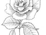 Drawing Of A Rose and Heart 132 Best Drawing Images Rose Drawing Tattoo Tattoo Drawings