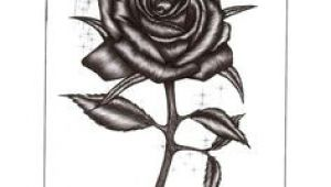 Drawing Of A Rose Beauty and the Beast Beauty and the Beast Drawings Beauty and the Beast Rose by