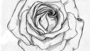 Drawing Of A Rose Simple Rose Sketch Ahmet A Am Illustrator Drawings Rose Sketch Sketches