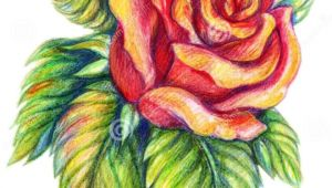 Drawing Of A Rose with Color 25 Beautiful Rose Drawings and Paintings for Your Inspiration