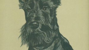 Drawing Of A Scottie Dog Gladys Emmerson Cook Scottish Terriers A Pinterest Scottish