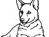 Drawing Of A Simple Dog How to Draw Puppy German Shepherd Dogs and Puppies Drawings In