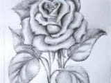 Drawing Of A Single Rose 61 Best Art Pencil Drawings Of Flowers Images Pencil Drawings