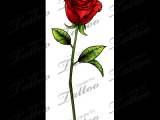 Drawing Of A Single Rose Sbink Single Red Rose Tattoo Ideas Tattoos Rose Tattoos Single
