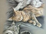 Drawing Of A Sleeping Cat 138 Best 16 Cats Art Pencil Charcoal Drawings Images Pencil