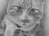 Drawing Of A Small Cat Custom Cat Drawing Custom Pet Portraits Lovely Animal Art Pet