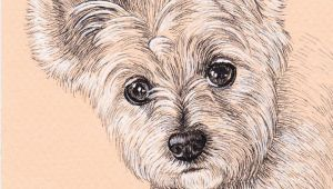 Drawing Of A Small Dog Lisa Creative Lab Custom Pet Portrait From Photo Dog Portrait