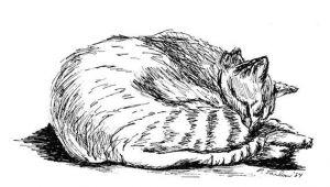 Drawing Of A Tabby Cat Tabby Cat Drawing Cat Pen and Ink Tabby Cat Print Tabby Cat Pen