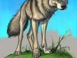 Drawing Of A Wolf Dog 947 Best Wolf Images In 2019 Character Design Drawings Fantasy