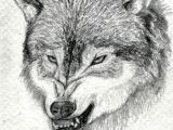 Drawing Of A Wolf Dog How to Draw A Growling Wolf Step 15 Art Drawings Wolf Drawing