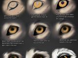 Drawing Of A Wolf Eye Wolf Eye Tutorial by themysticwolf Deviantart Com On Deviantart