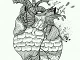 Drawing Of An Actual Heart Pin by Leah Metzler On Hearts Anatomical Heart Art Art Draw