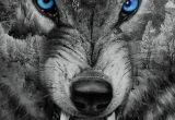 Drawing Of An Angry Wolf Download Angry Wolf Wallpaper by Georgekev now Browse Millions Of