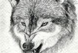Drawing Of An Angry Wolf How to Draw A Growling Wolf Step 15 Art Drawings Wolf Drawing