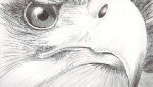 Drawing Of An Eagles Eye Eye Reflection Drawing Eagle Eye Vision 11 X14 Pencil On