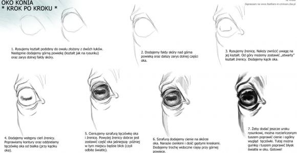 Drawing Of An Eye Step by Step Horse Eye Animal Reference In 2019 Horse Drawings Drawings