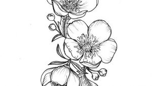 Drawing Of buttercup Flower Custom buttercup Illustration Tattoo for Greer by themintgardener