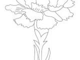 Drawing Of Carnation Flower Image Result for Carnation Flowers Drawing Drawing Inspirations