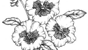 Drawing Of Complete Flower How to Create and Draw A Planting Plan You Can Use for Your Own